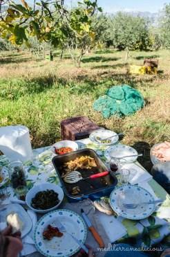 olive harvest 2