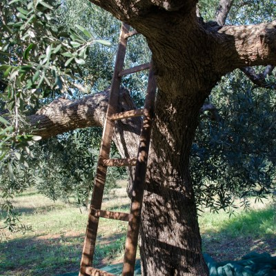 My Olive Harvest Experience in Southern Italy