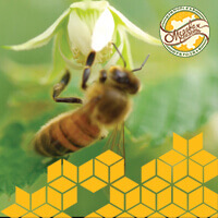 Полет пчелы