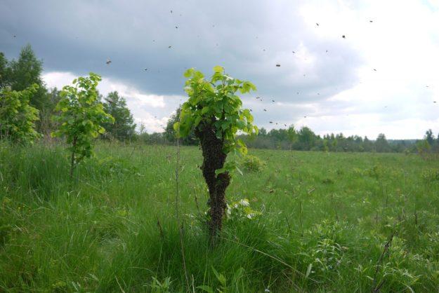Костромские пчелы