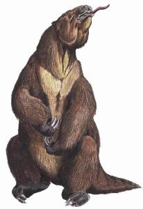 "Megatherium [megg-uh-THEER-ee-yum] from the Greek μέγας (megga) = ""great"" + θηρίον (theer-ee-yon) = ""beast"" was a genus of elephant-sized ground sloths native to South America that lived from the Early Pliocene through the end of the Pleistocene. Its size was exceeded by only a few other land mammals, including mammoths and Paraceratherium."
