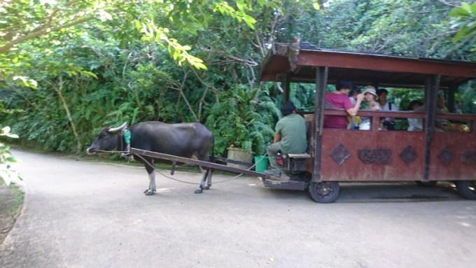 途中、このような水牛車の一行をお見掛けします。