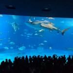 沖縄観光2日目・美ら海水族館・古宇利島での気づきを振り返ってみた