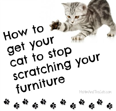 Help My Cat Is Scratching The Furniture Guest Post
