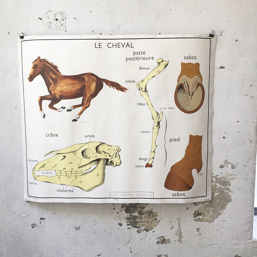Affiche Cheval Affiche Lapin Cheval