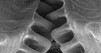 A Vida Imita a… Engenharia. Descoberto inseto com engrenagens naturais
