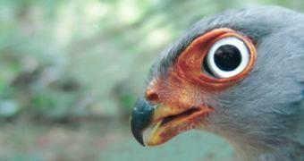 WWF divulga vídeo com Parallax Sequence