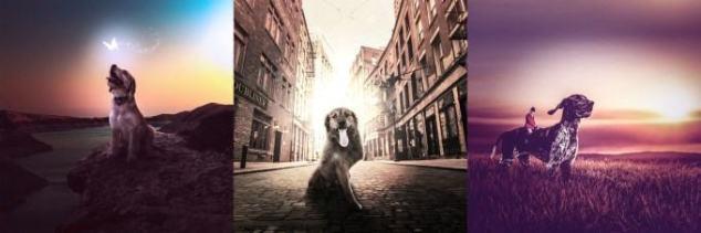 dog_banner-680