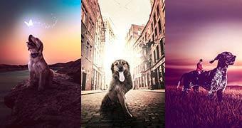 Fotógrafo usa sua arte para incentivar a adoção de cães abandonados