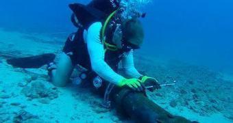SACS, o cabo submarino ligará o Brasil à África em 2016