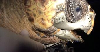 Tartaruga ganha mandíbula impressa em 3D após acidente