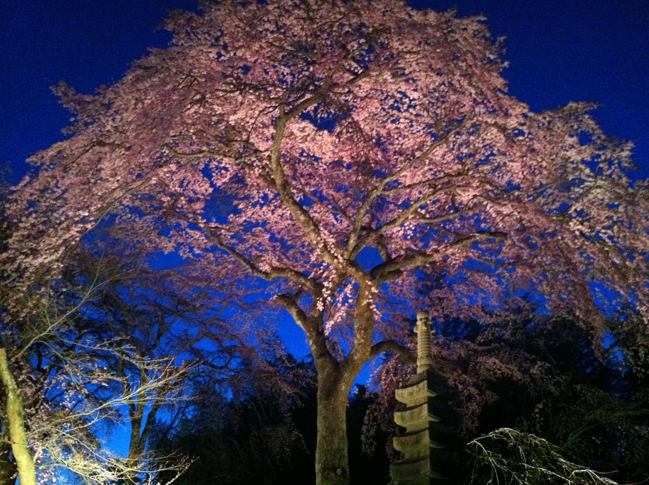 Tsunami and the Cherry Blossom film