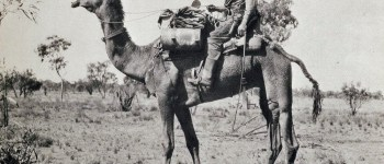 The traveller and explorer Michael Terry on his riding camel, Dick, in 1933. This camel was capable of covering sixty miles a day. (Nat Library of Aust)