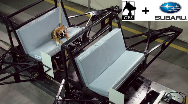 Subaru y Center for Pet Safety juntos para la seguridad de tu mascota