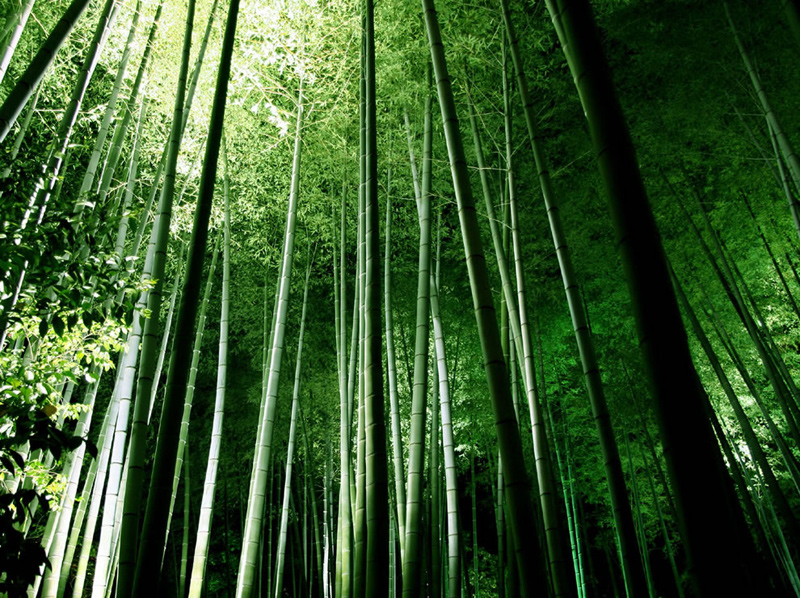 Rainbow Falls Hawaii Wallpaper Beautiful Bamboo Forests 20 Pictures Memolition