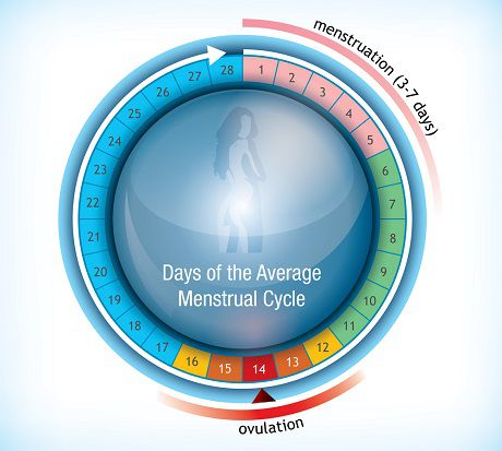 Menstrual-Cycle-Calculator Calculate your Period, Ovulation and