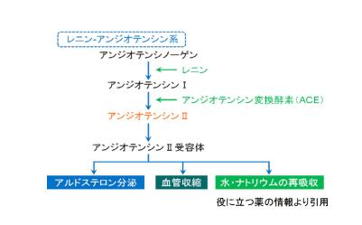 ACE阻害薬の作用機序を図に示しています。役に立つ薬の情報HPのご厚意より引用させていただきました。