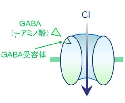GABA受容体を図にしたものです。役に立つ薬の情報HP様からの厚意で使わせていただきました。