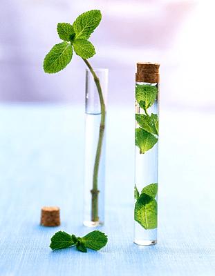 eaufloralementhe