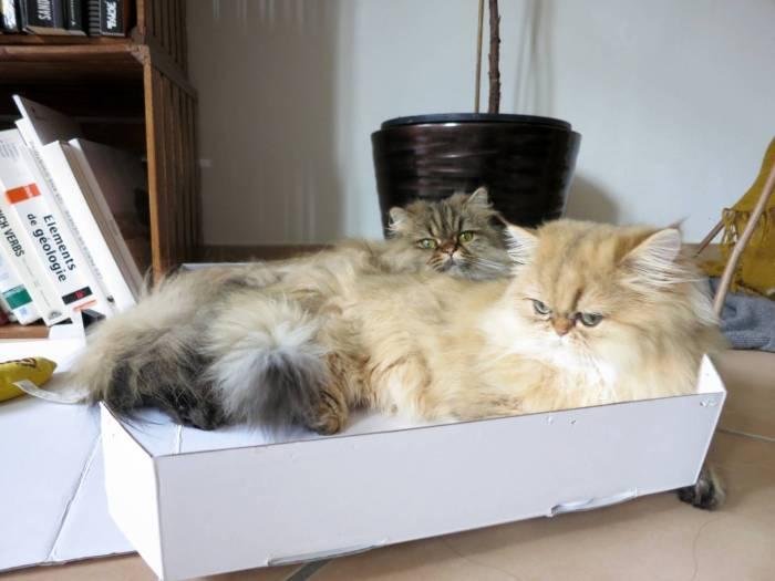 DIY cat treat puzzle toy