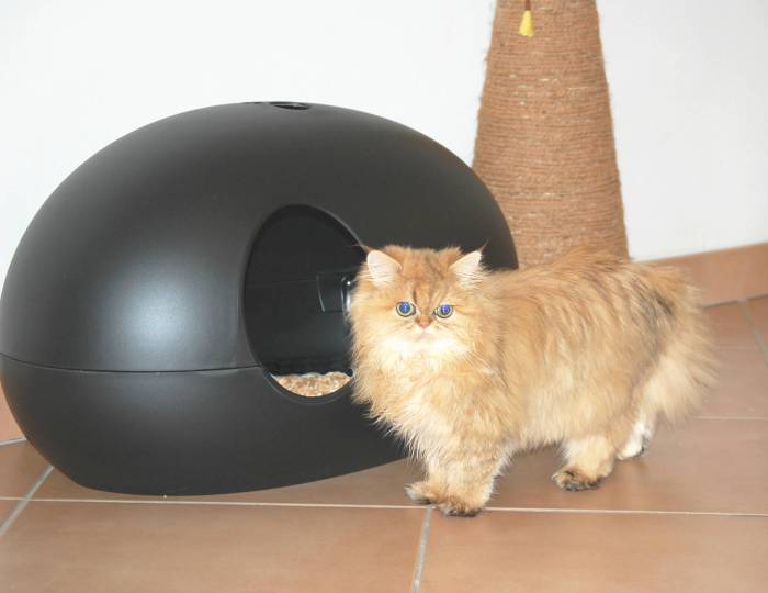 poopoopeedo cat litter box