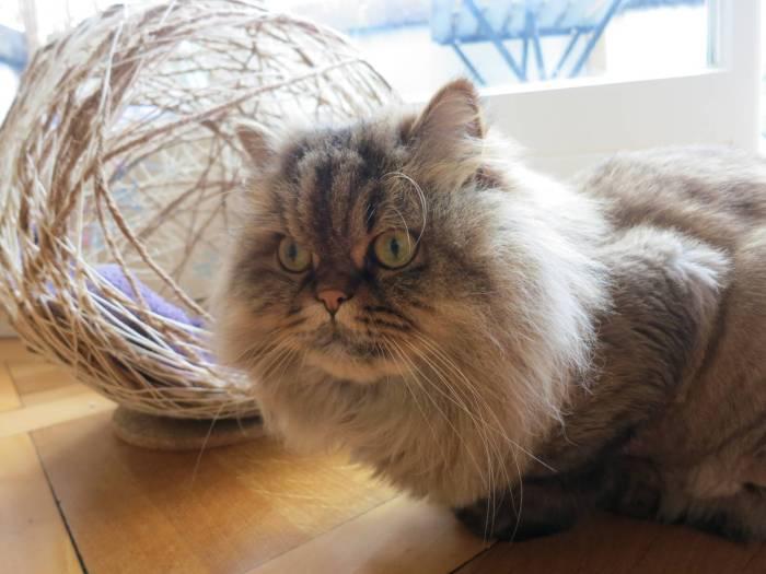 DIY yarn cat ball cave bed