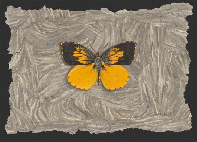 Derek Bond, California Dogface Butterfly, egg tempera on hornet nest paper, 2009