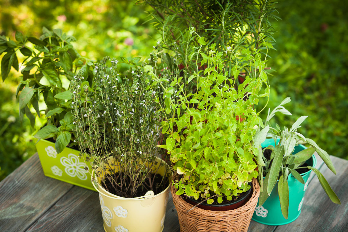 Herb Container Ideas 4 Diy Container Garden Ideas For Spring Mesa Awning