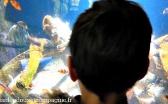 aquarium poisson clown