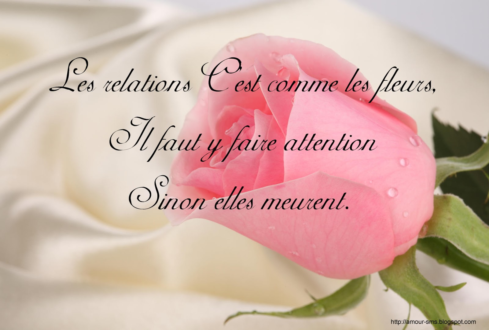 Image D Amour Proverbes Et Citations D Amour En Images Message D Amour