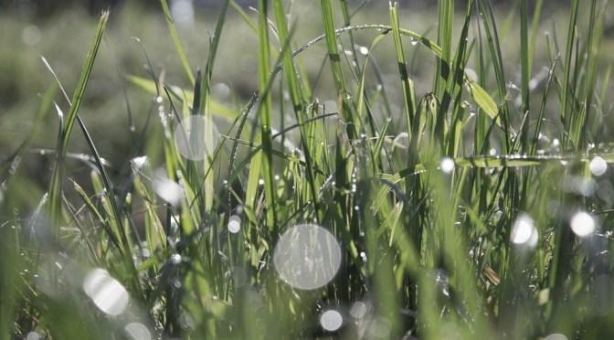 grass-977717_960_720