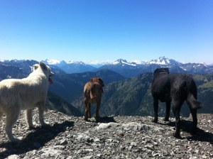 Zeus, Dottie and Ella enjoying the view and the cool breeze atop Slate Peak. Photo courtesy of Julianna Owens.