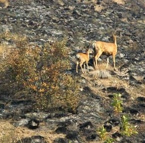 Wildlife managers assessing fire impacts