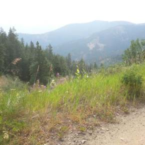 Noticable improvements on local Forest Service roads