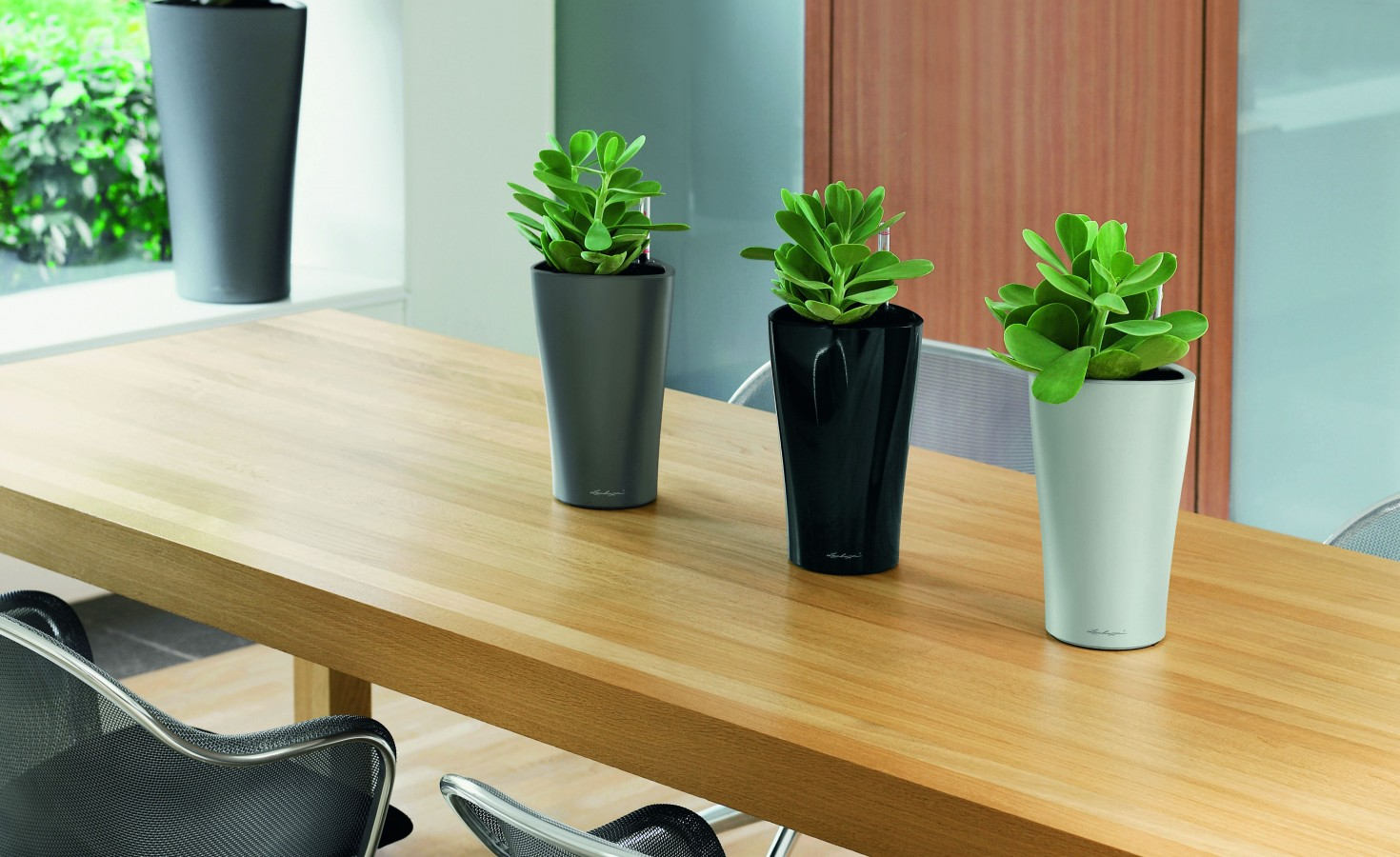 Indoor Plants For The Office Indoor Plants Archives Vlsi Homepage