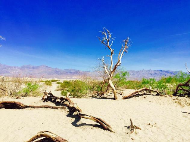 Deserted in the sand dunes at deathvalley