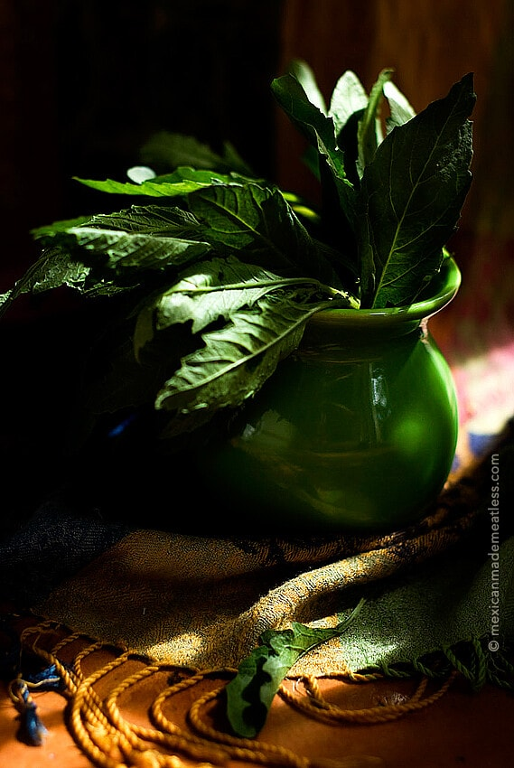 Epazote or Mexican Tea