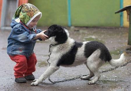 Không cho bé đùa giỡn, kéo đuôi chó mèo.