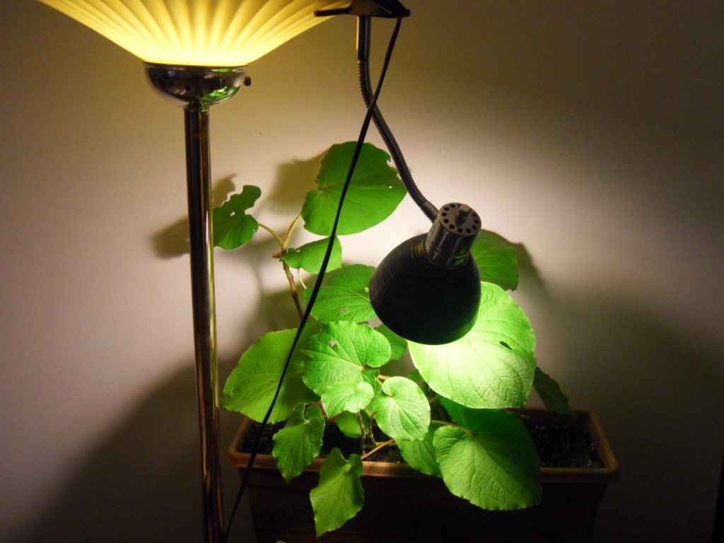 Grow Lights For Indoor Plants Types Of Grow Lights How Ornament My Eden