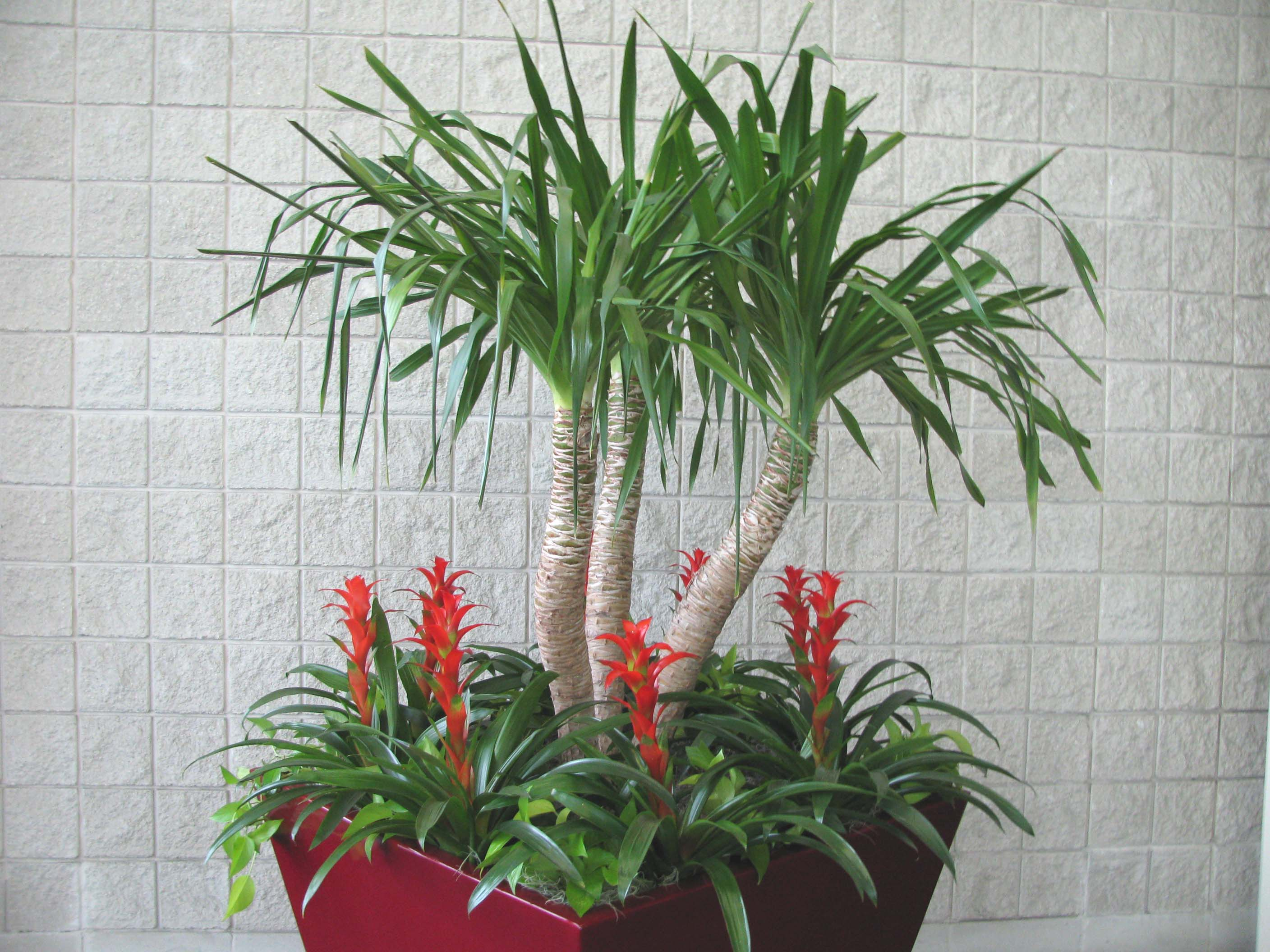 Tall Indoor House Plants Low Light Facts About Low Light House Plants Plants In Nanopics