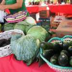 Coral Gables Farmers Market on Saturdays