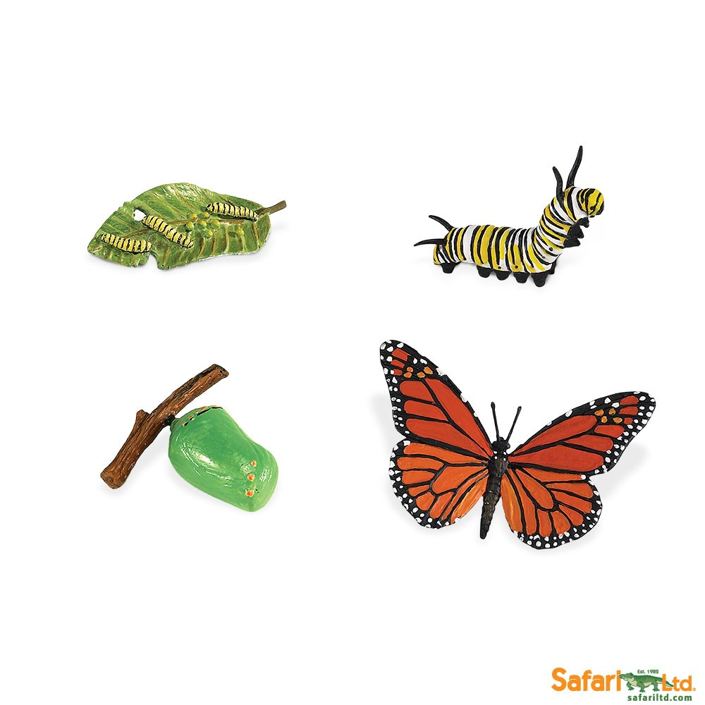 Free 3d Dinosaur Wallpaper Life Cycle Of A Monarch Butterfly Replica Set Michigan
