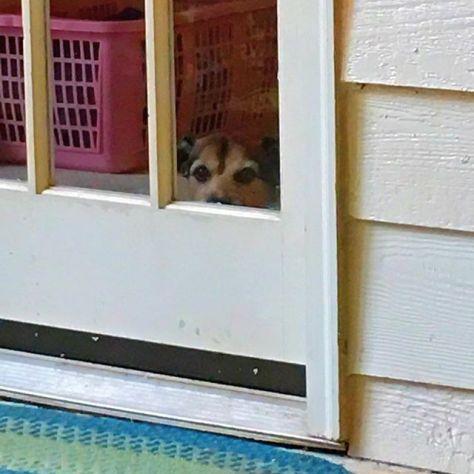 #envy #dogsofinstagram