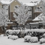 Raleigh Snow
