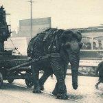 WWI Animals: Elephants on Parade
