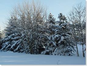 January Snow 028