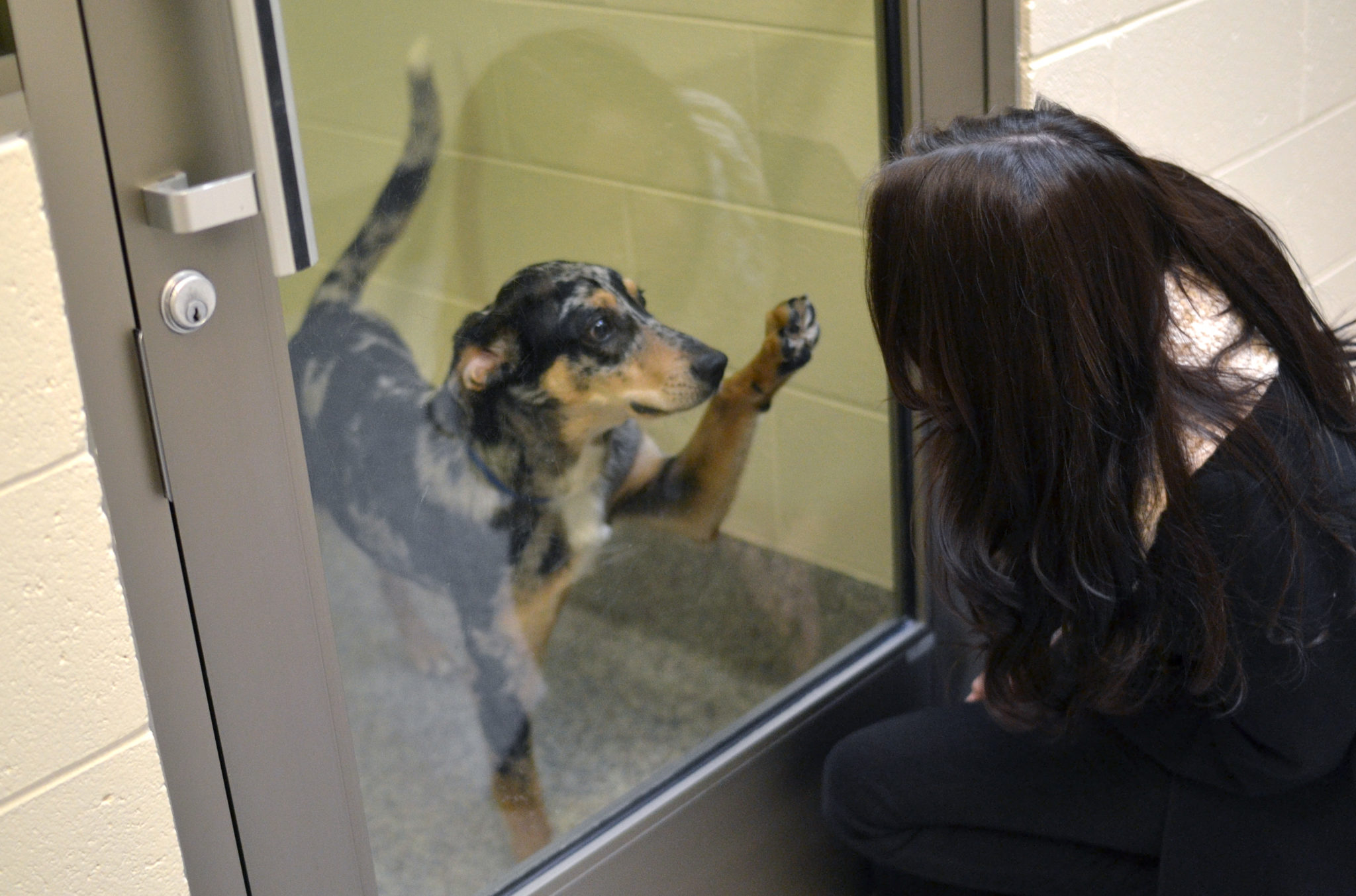 Rescue Dogs Puppies For Adoption Animal Shelters Adopt A Pet Michigan Humane Society