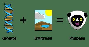 Genotype_Plus_Environment