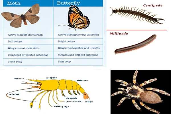 General Characteristics and Classification of Arthropoda