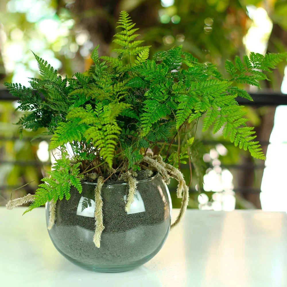 Como Decorar Con Plantas Hermosas Plantas Para Decorar Tu Recibidor Mi Decoración